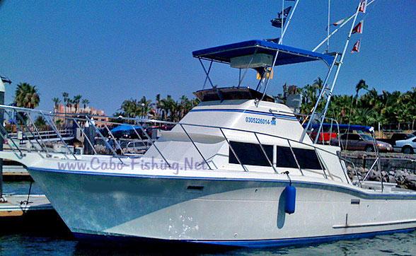35 39 Bertram Deep Sea Fishing Cabo San Lucas