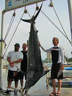 800 Lb. Marlin by Cabo Fishing